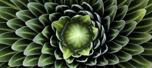 nature-pattern-photography-thumb640