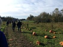 Pumpkin Patch fieldtrip.